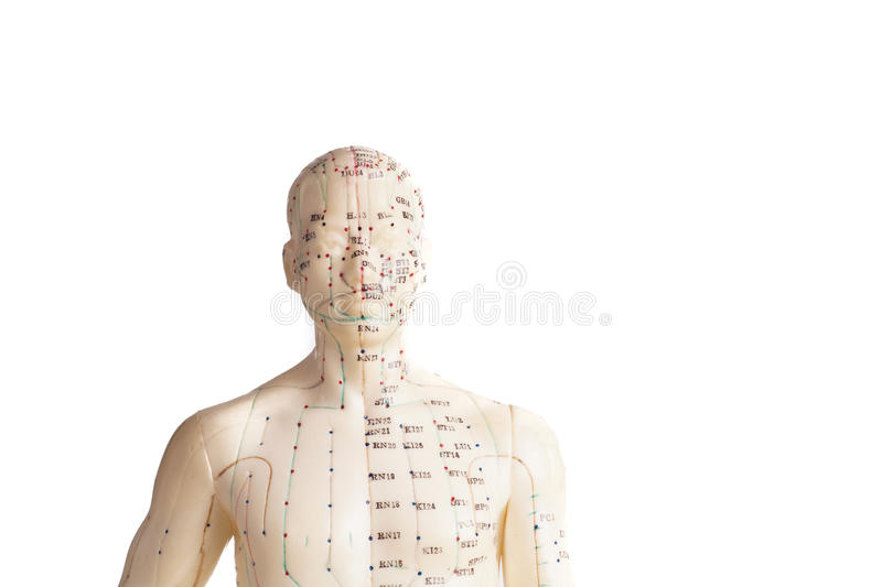 Acupunctuurmodel van mens stock foto