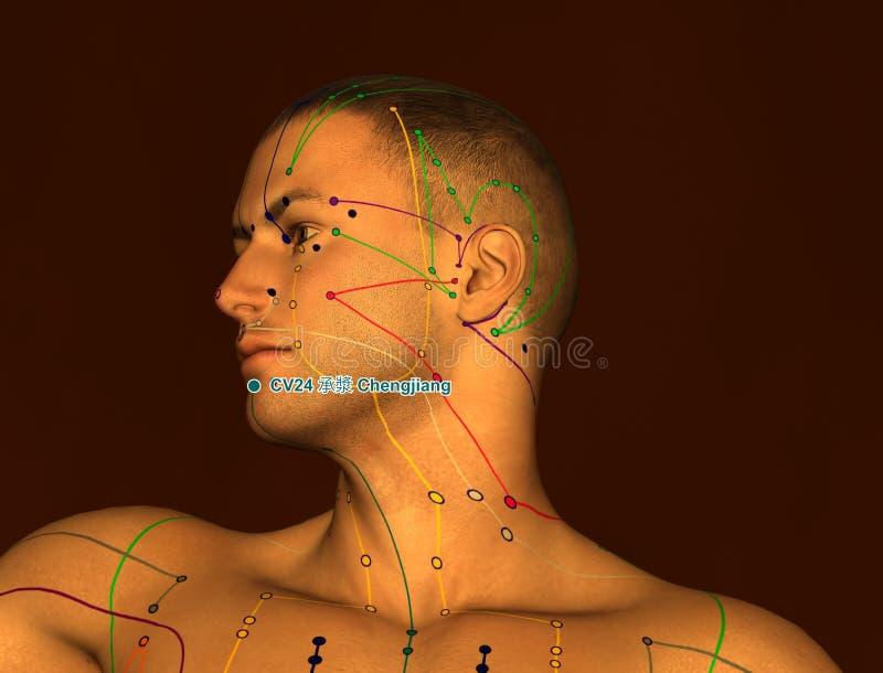 Acupunctuurpunt CV24 Chengjiang, 3D Illustratie, Bruine Backgr stock illustratie