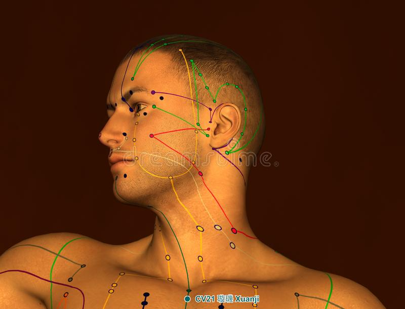 Acupunctuurpunt CV21 Xuanji, 3D Illustratie, Bruine Achtergrond royalty-vrije illustratie