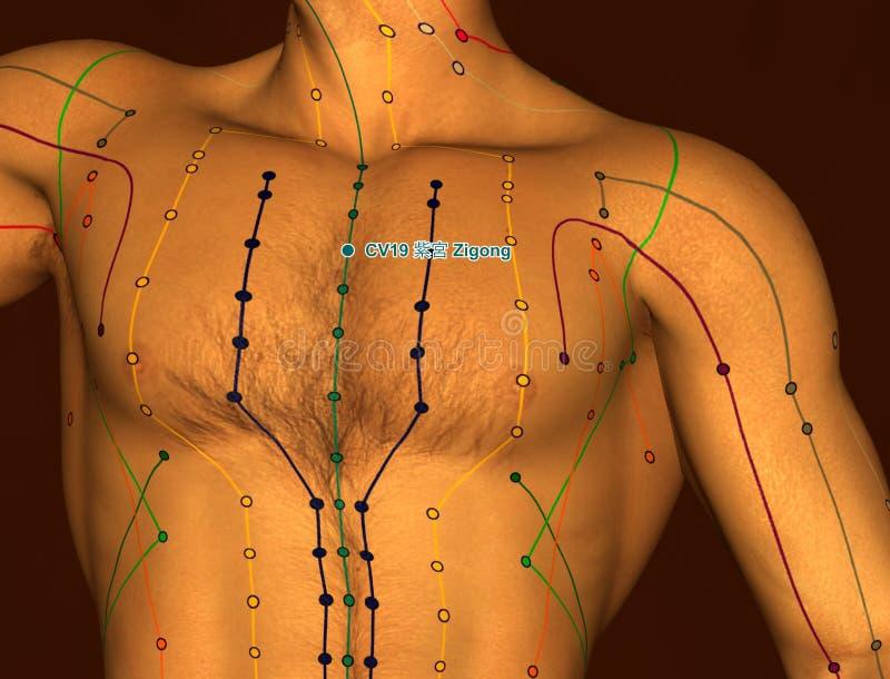 Acupunctuurpunt CV19 Zigong, 3D Illustratie, Bruine Achtergrond stock illustratie