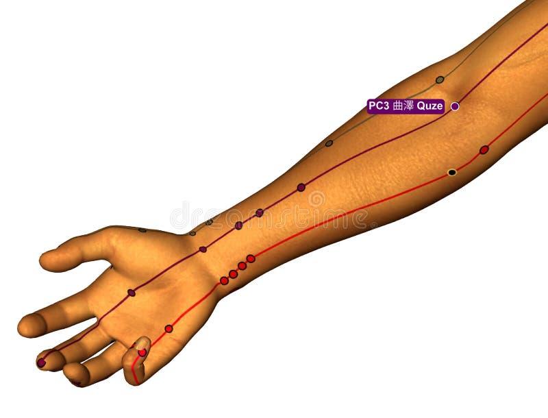 Acupunctuurpunt PC3 Quze, 3D Illustratie, Witte Achtergrond stock illustratie