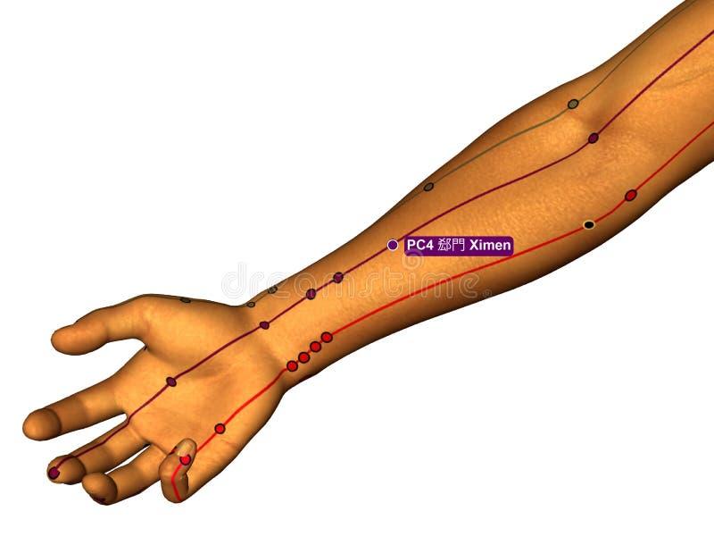 Acupunctuurpunt PC4 Ximen, 3D Illustratie, Witte Achtergrond stock illustratie