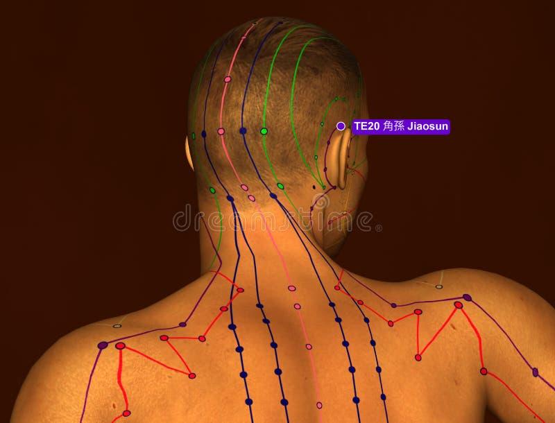 Acupunctuurpunt TE20 Jiaosun, 3D Illustratie, Bruine Achtergrond vector illustratie