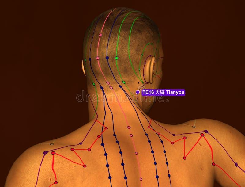 Acupunctuurpunt TE16 Tianyou, 3D Illustratie, Bruine Achtergrond vector illustratie