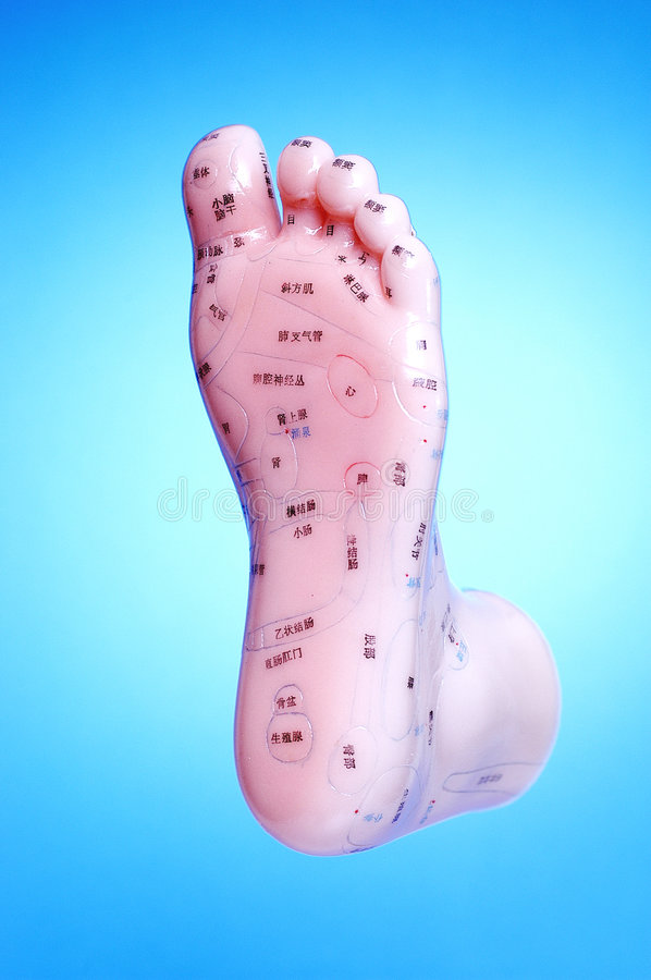 Acupuncture Foot Meridian Points. Model foot with acupunture points on it royalty free stock image