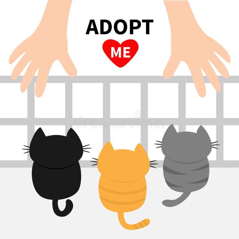 Adópteme Tres Gatitos Que Miran Para Arriba A La Mano Humana ...