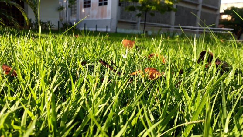 Ad ogni erba verde, un sole fotografia stock libera da diritti
