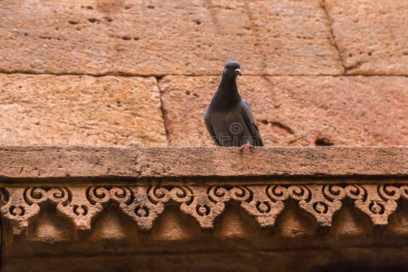 Adalaj ni Vav, Ahmadabad. Stone carving in Adalaj Ni Vav, Ahmadabad, India royalty free stock image