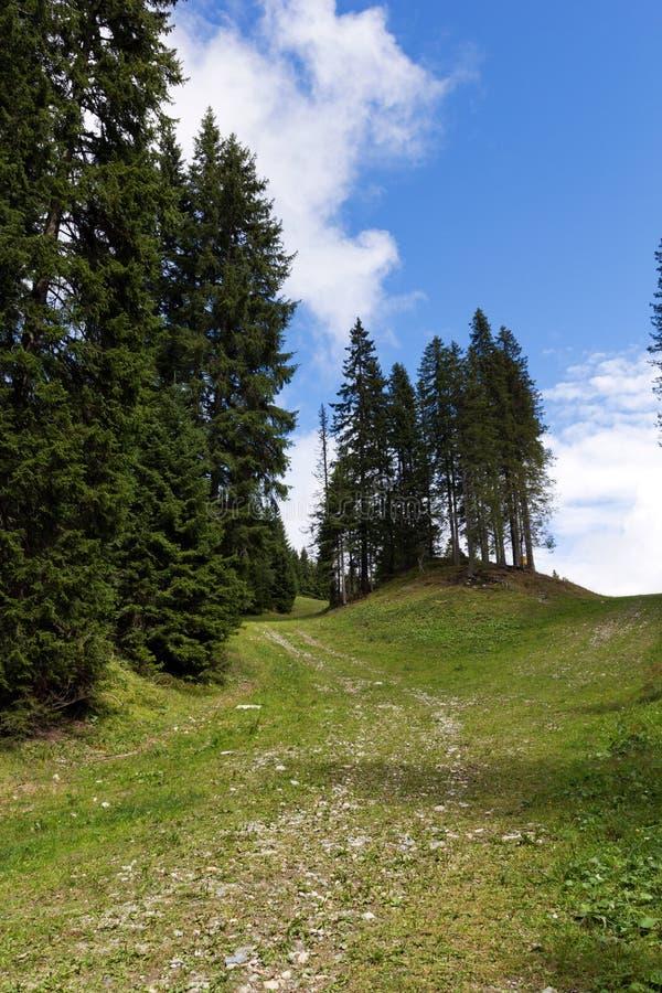 Adamello Natuurreservaat royalty-vrije stock afbeeldingen