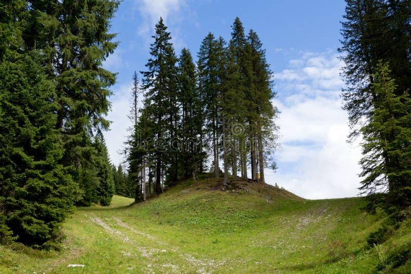 Adamello Natuurreservaat stock afbeeldingen