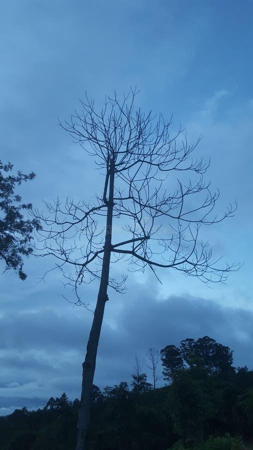 Adams peake - Sri Lanka royaltyfria foton