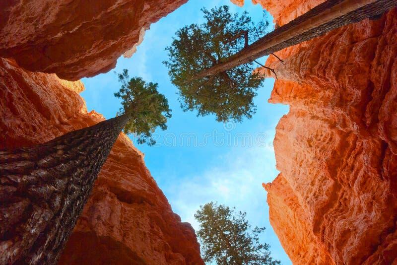 Adattabilità degli alberi crescenti immagini stock