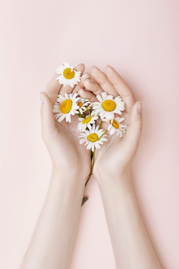 Adatti a camomilla di arte della mano le donne naturali dei cosmetici, bella mano bianca dei fiori della camomilla con trucco lum fotografia stock libera da diritti