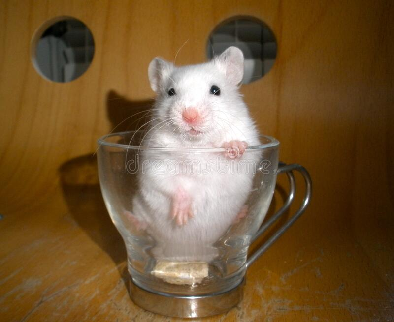 Add A Hammy To Your Coffee Free Public Domain Cc0 Image