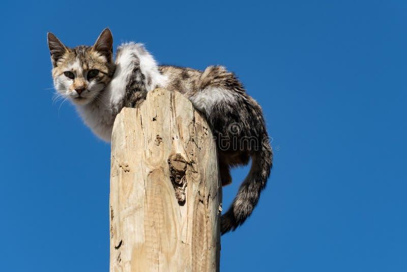 Adderande multicolor-katt som sitter på trästolpe arkivfoto