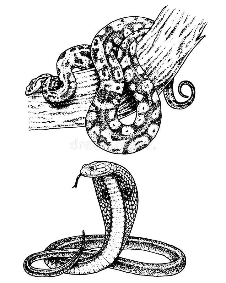 Adderslang koninklijke serpentcobra en python, anaconda of adder, gegraveerde die hand in oude schets, uitstekende stijl wordt ge stock illustratie