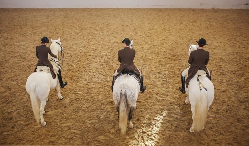 Addestramento dei cavalli di Lipizzaner, Vienna, scuola di guida spagnola fotografia stock libera da diritti