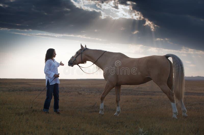 Addestramento del cavallo immagine stock libera da diritti