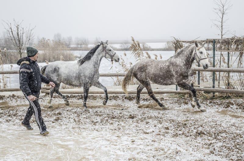 Addestramento del cavallo di inverno immagini stock libere da diritti