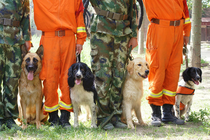 Addestramento di cani fotografia stock libera da diritti