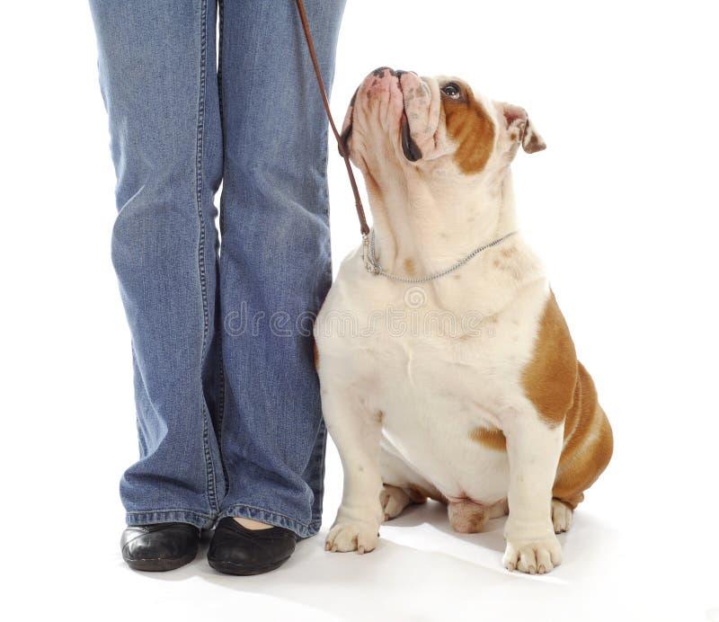 Addestramento di obbedienza del cane immagine stock libera da diritti