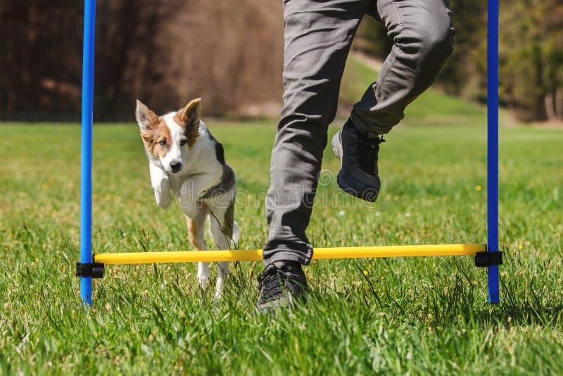 Addestramento di sport del cane di agilità con un cucciolo di cane, saltante sopra la transenna fotografia stock