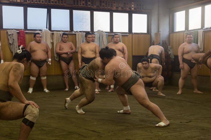 Addestramento lottare di sumo a Tokyo, Giappone fotografia stock