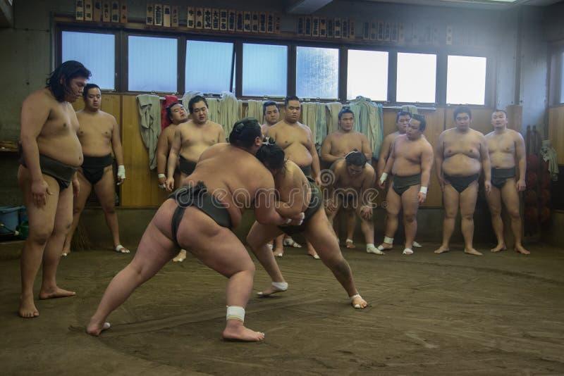 Addestramento lottare di sumo a Tokyo, Giappone fotografie stock libere da diritti