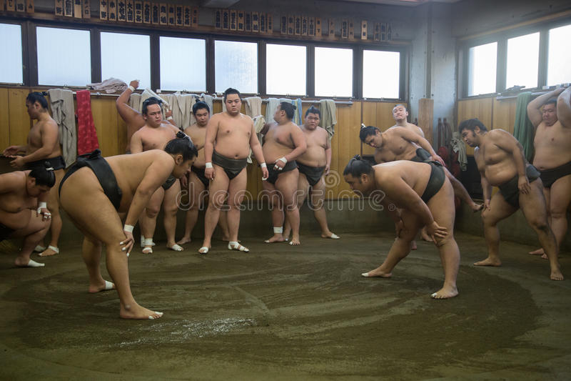 Addestramento lottare di sumo a Tokyo, Giappone immagini stock libere da diritti