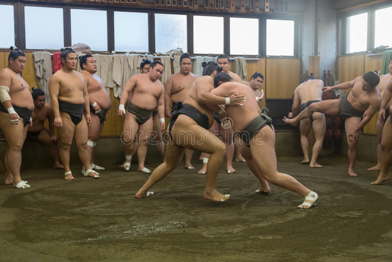 Addestramento lottare di sumo a Tokyo, Giappone fotografia stock libera da diritti
