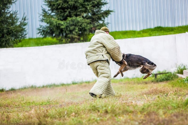 Addestramento militare del pastore tedesco immagini stock