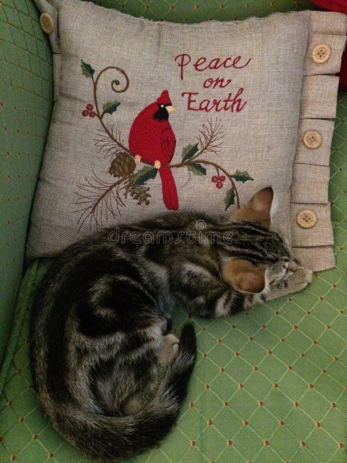 Addie Cat - fred p? jord royaltyfria bilder