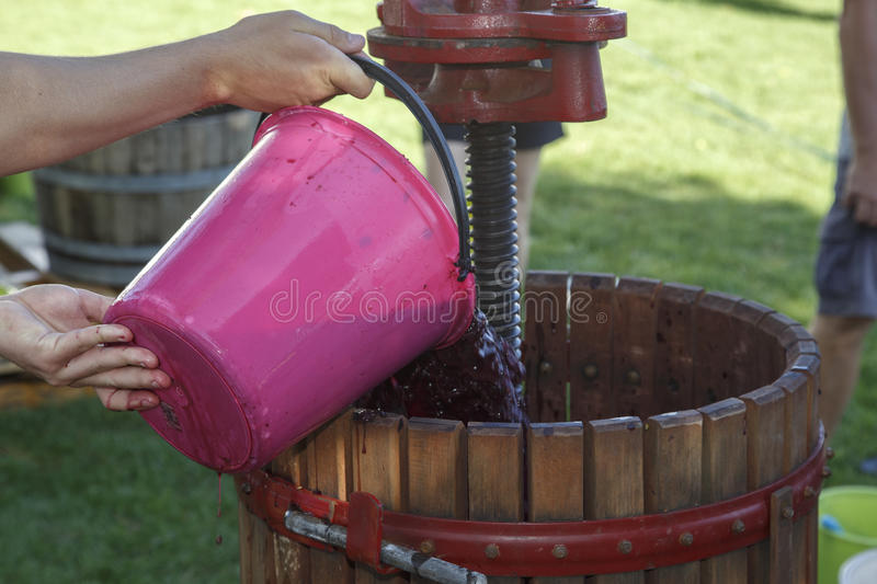 Adding grapes to a an old wooden manual wine press. stock image