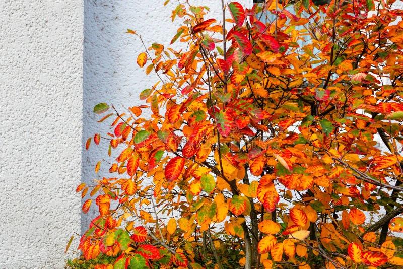 Addio di autunno La combustione rossa va arrivederci fotografia stock