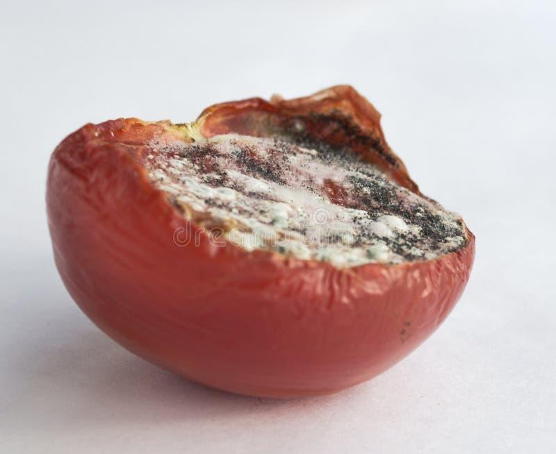 Addled psuł karmowych warzywo pomidory zdjęcia stock