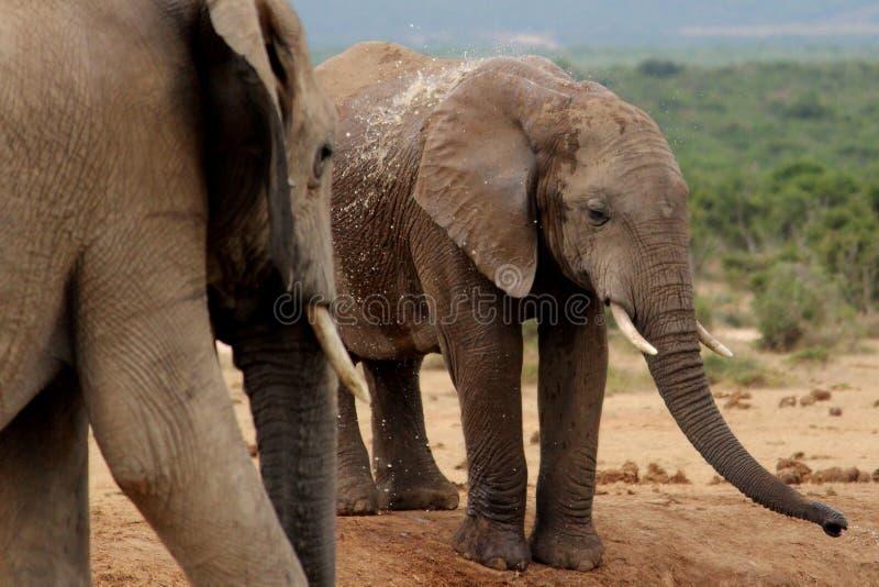 Addo Elephants bij bar royalty-vrije stock fotografie
