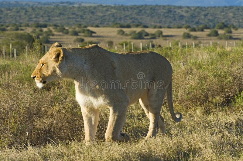 Download Addo Love Object Royalty Free Stock Photo - Image: 6967895