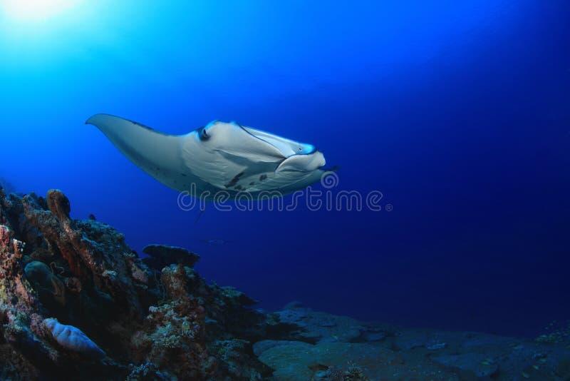 addu ωκεάνια ακτίνα manta των Μαλβίδων ατολλών ινδική στοκ εικόνα