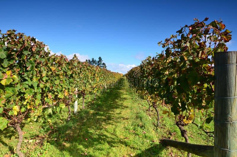 Adega Soljans da propriedade dos vinhedos auckland Em algum lugar em Nova Zelândia fotos de stock royalty free