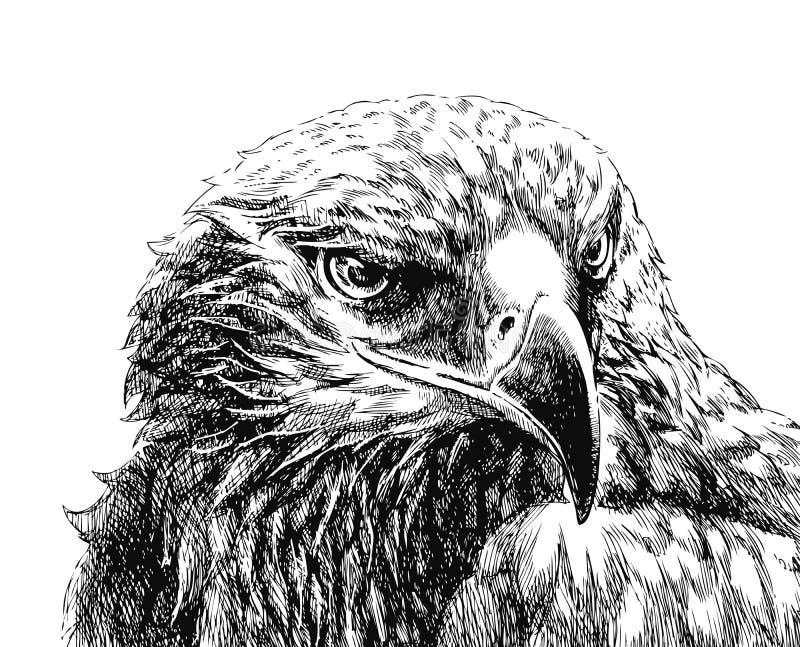 Adelaar royalty-vrije illustratie