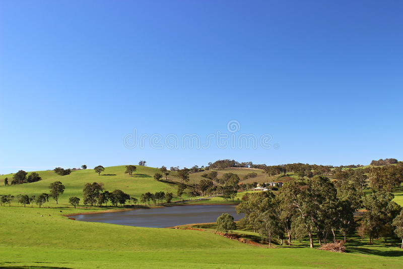 Adelaide kullar med den vinorchad och sjön fotografering för bildbyråer