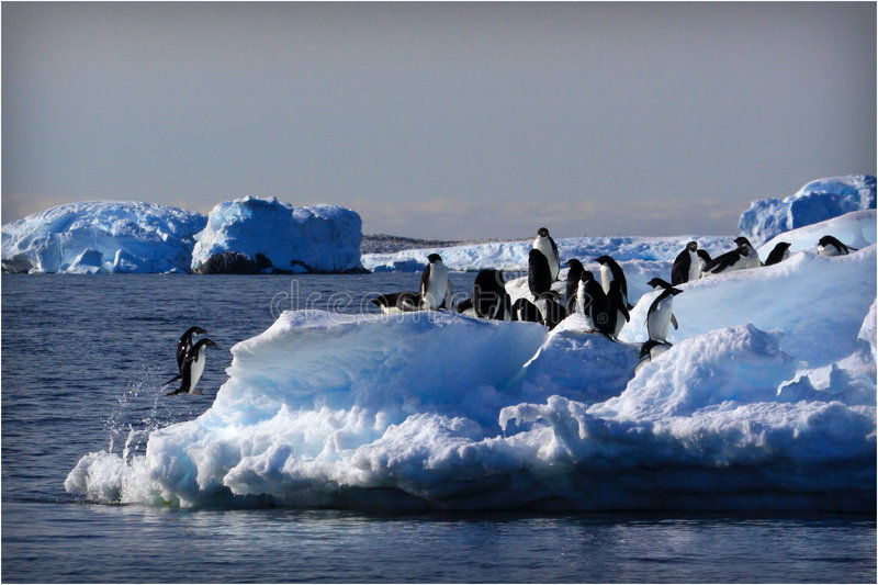 Adele Penguins Jumping stock afbeelding