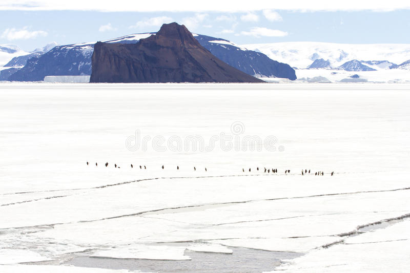 Adelie penguins in Gustaf Sound, Antarctica royalty free stock photo