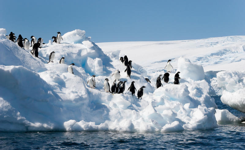 Adelie penguins on iceberg stock photo