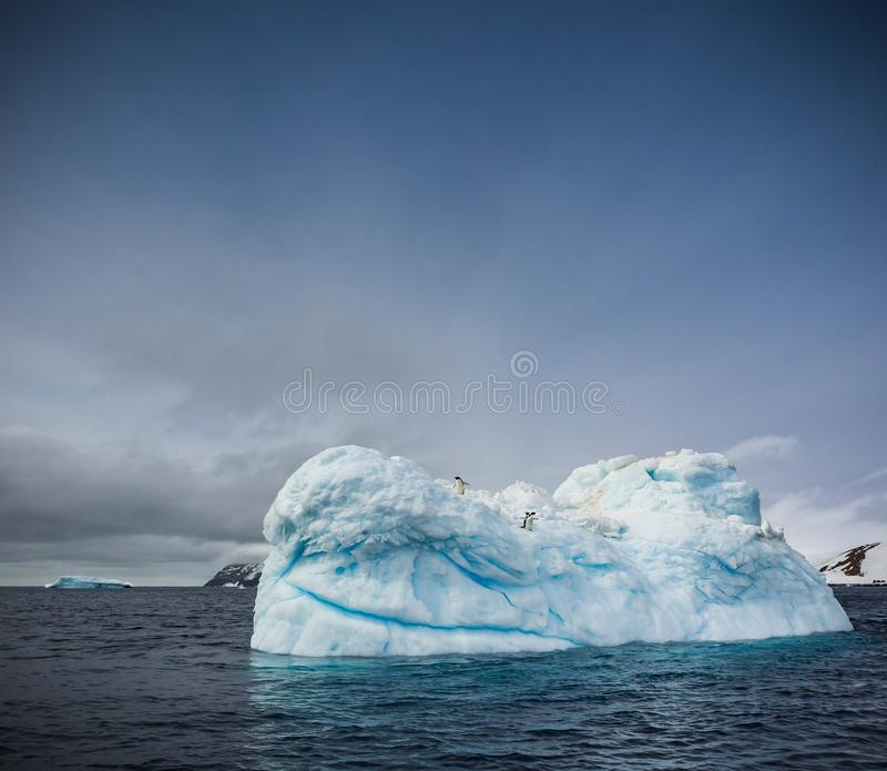 Adelie penguins sit high atop large ice glacier near Brown Bluff in South Georgia royalty free stock images