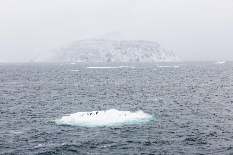 Adelie pingvin på is bordlägger och en ö arkivfoto