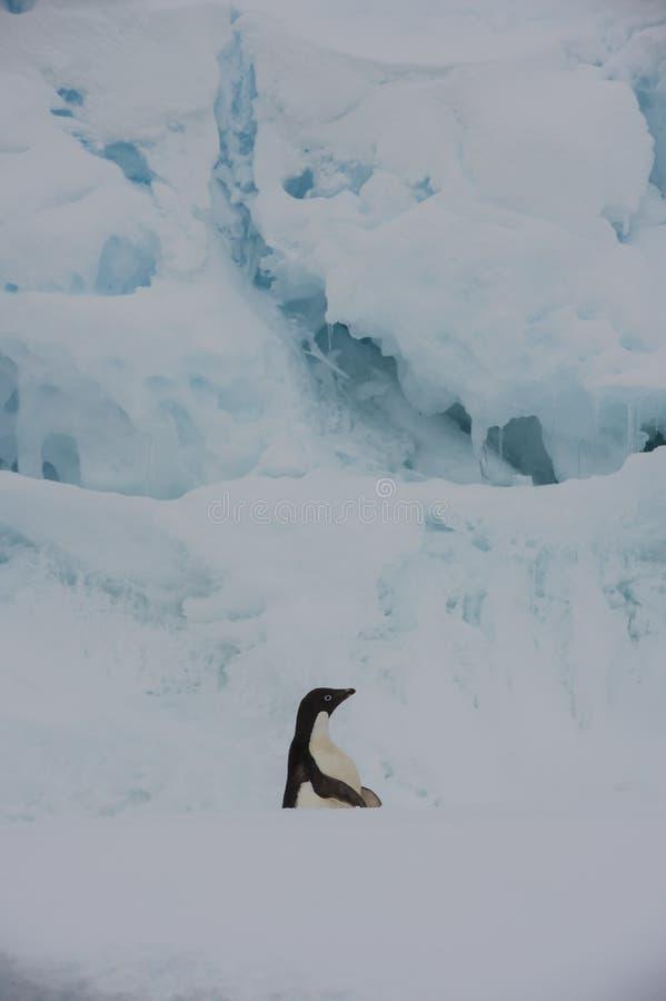 Adelie pingwin na górze lodowa fotografia stock
