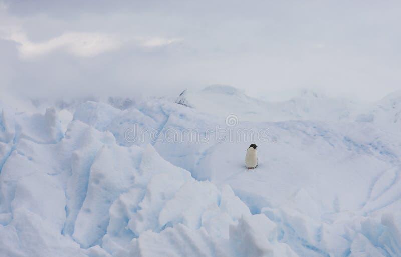 Adelie pingwin na górze lodowa zdjęcie royalty free