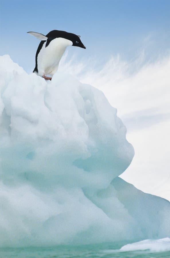 Adelie pingwinu doskakiwanie od góry lodowa fotografia royalty free