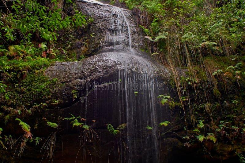 Download Adelina Falls imagen de archivo. Imagen de bosque, lawson - 41916675